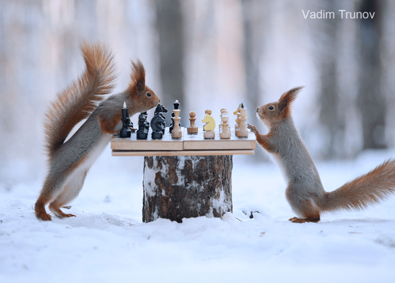 squirrels - Squirrel - Vadim Trunov