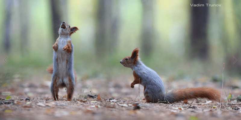 squirrels - Mammal - Vadim Trunov
