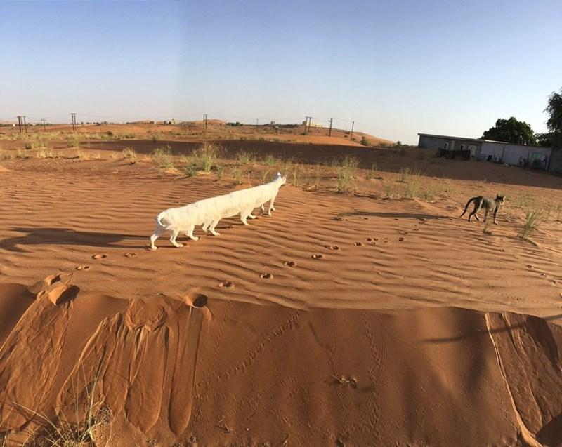 cat panorama fail - Sand