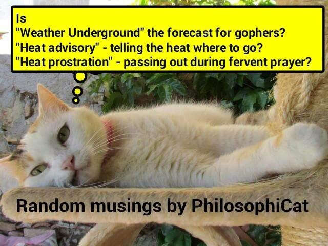 Random musings by PhilosophiCat (recaption: http://tinyurl.com/gkq43eo