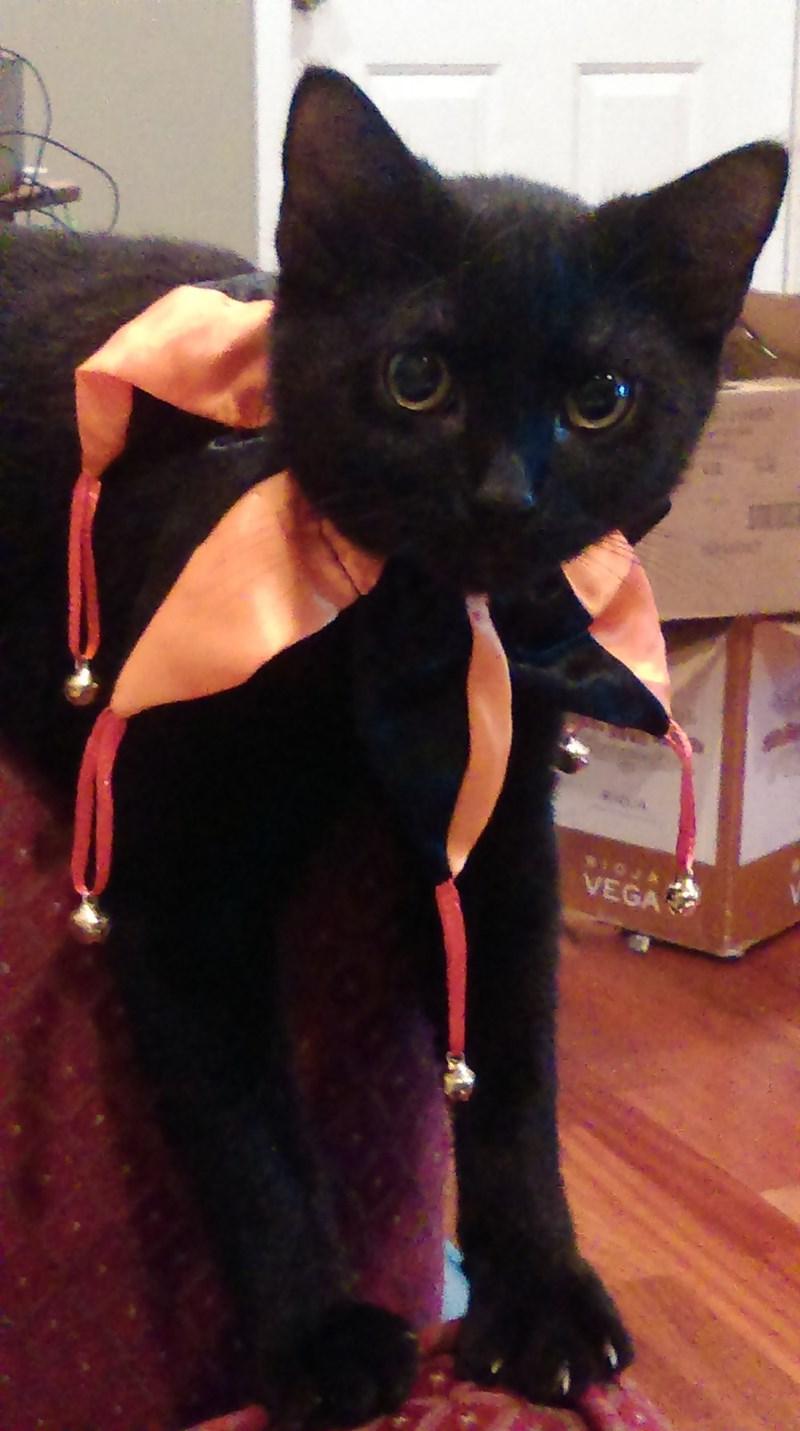 costume Cats - 8979290880