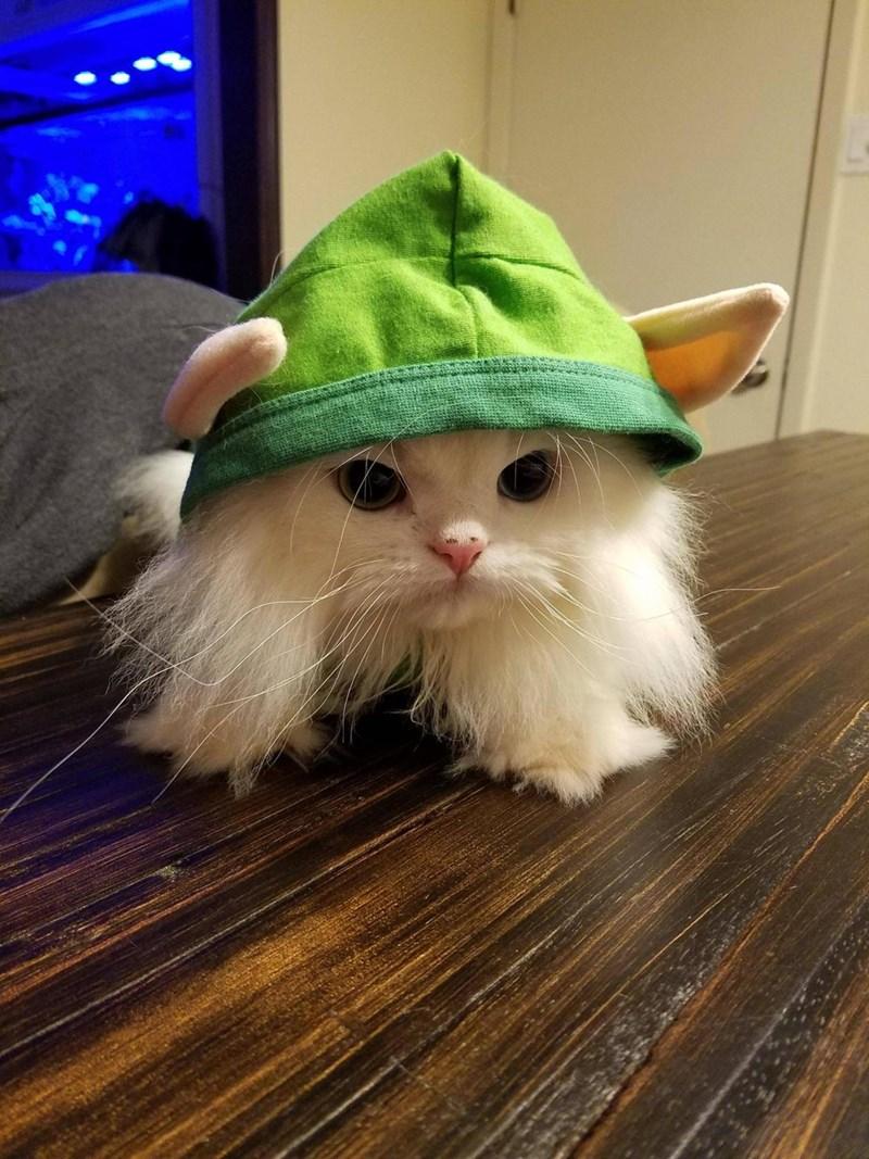 costume,elf,Cats