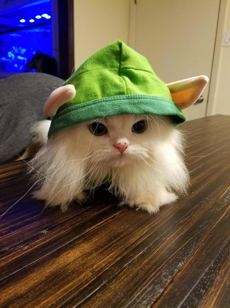 costume elf Cats - 8979291904