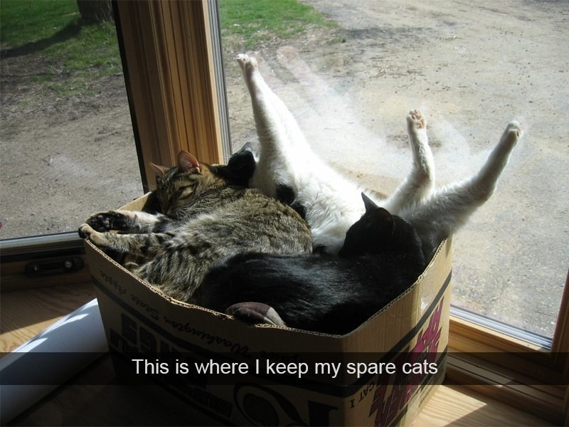 snapchat Cats - 8979293440