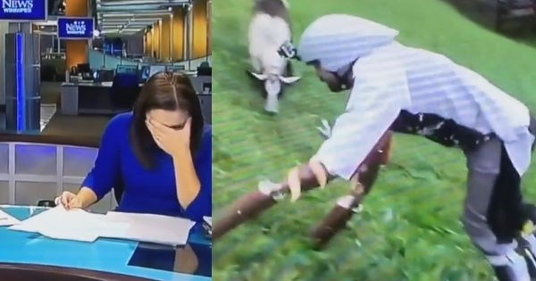 local-news-television-anchor-loses-it-when-reporting-on-guy-who-lives-as-goat