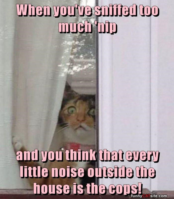 When you've sniffed too much 'nip  and you think that every little noise outside the house is the cops!