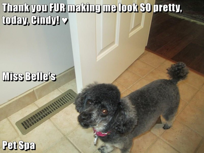 Thank you FUR making me look SO pretty, today, Cindy! ♥ Miss Belle's Pet Spa