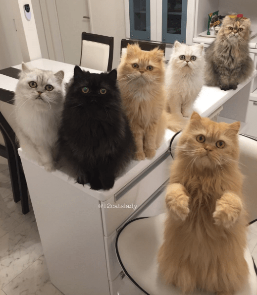 cat lady - Cat - e12catslady