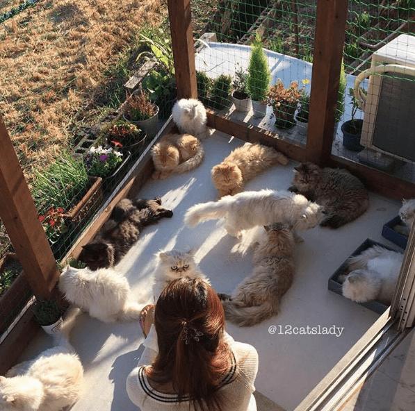 cat lady - Plant - @12catslady