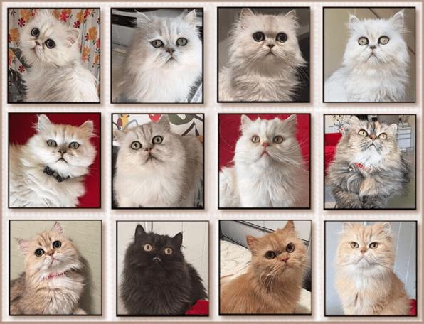 cat lady - Cat