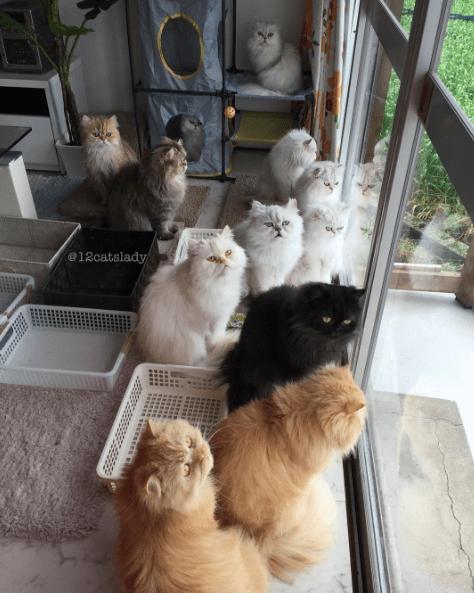 cat lady - Cat - @12catslady