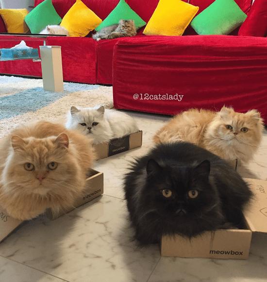 cat lady - Cat - @12catslady mepwt neowbox meowbox