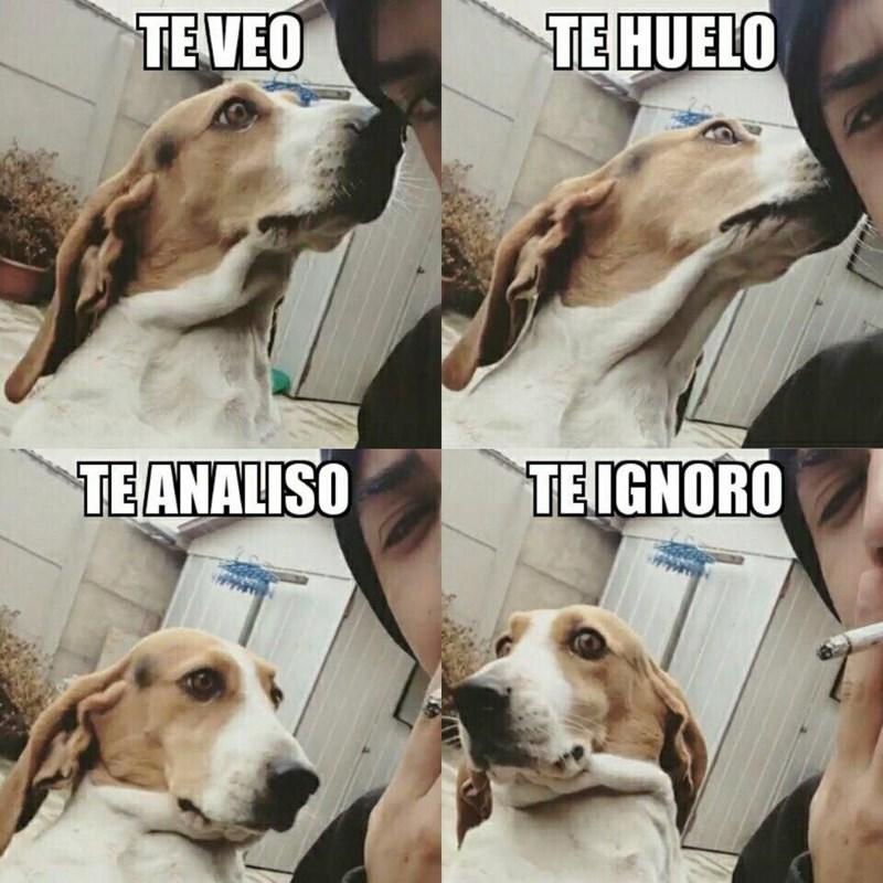 perras