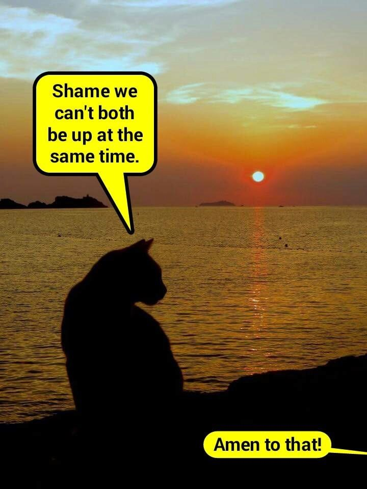Many a catslave has said the same thing   (recaption: http://tinyurl.com/guc48rq