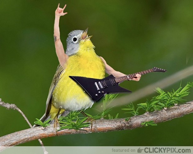 Bird - featured on CLICKYPIX.com