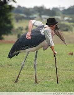 Bird - CLICKYPIL.com