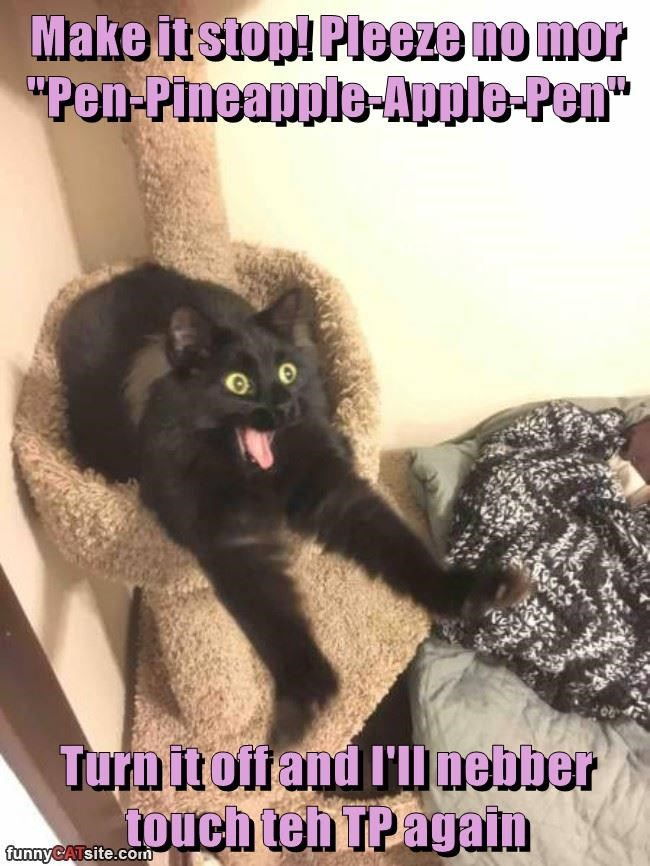 """Make it stop! Pleeze no mor """"Pen-Pineapple-Apple-Pen""""  Turn it off and I'll nebber touch teh TP again"""