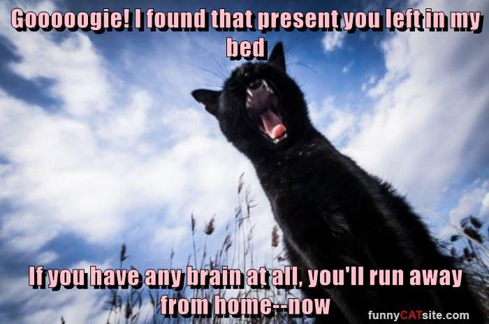 Gooooogie! I found that present you left in my bed  If you have any brain at all, you'll run away from home--now