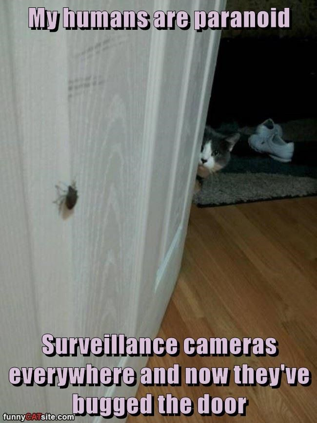 My humans are paranoid  Surveillance cameras everywhere and now they've bugged the door