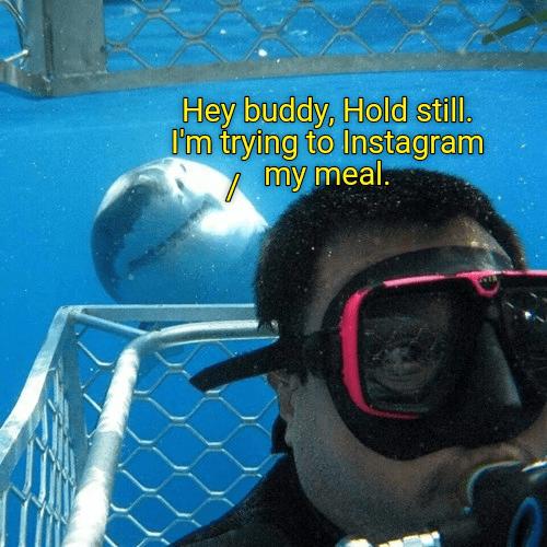 instagram shark selfie - 8980268800