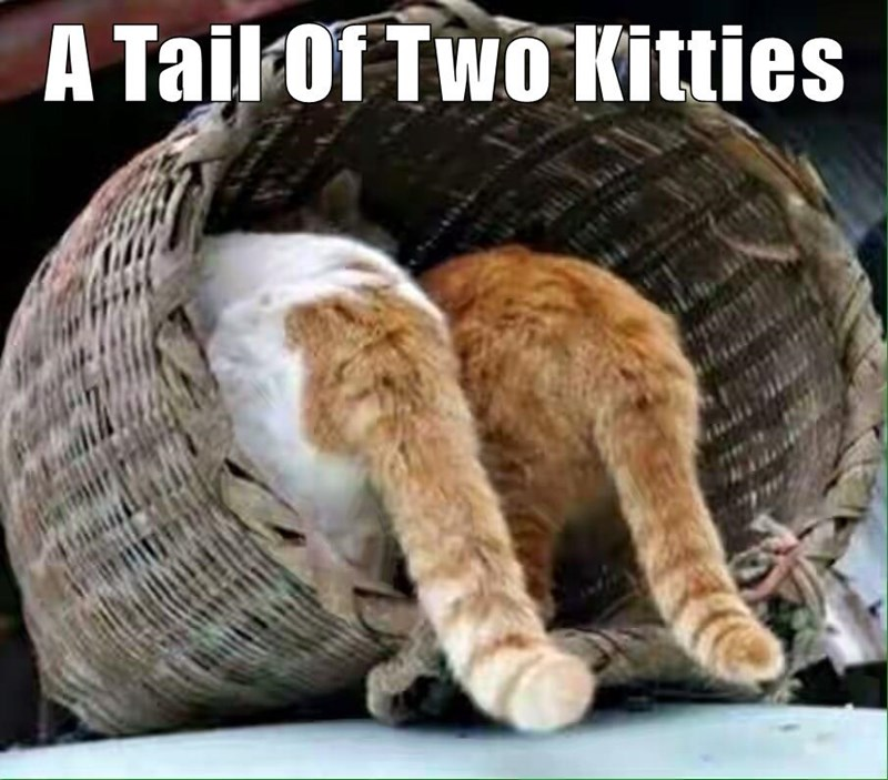 A Tail Of Two Kitties