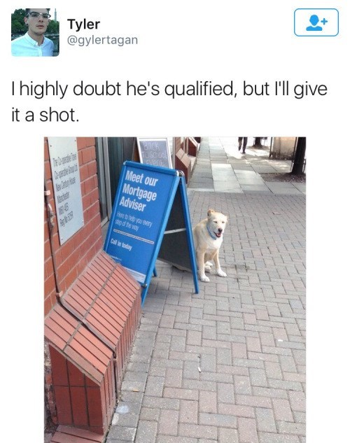 dogs signs finance He's a Professional, How Dare You