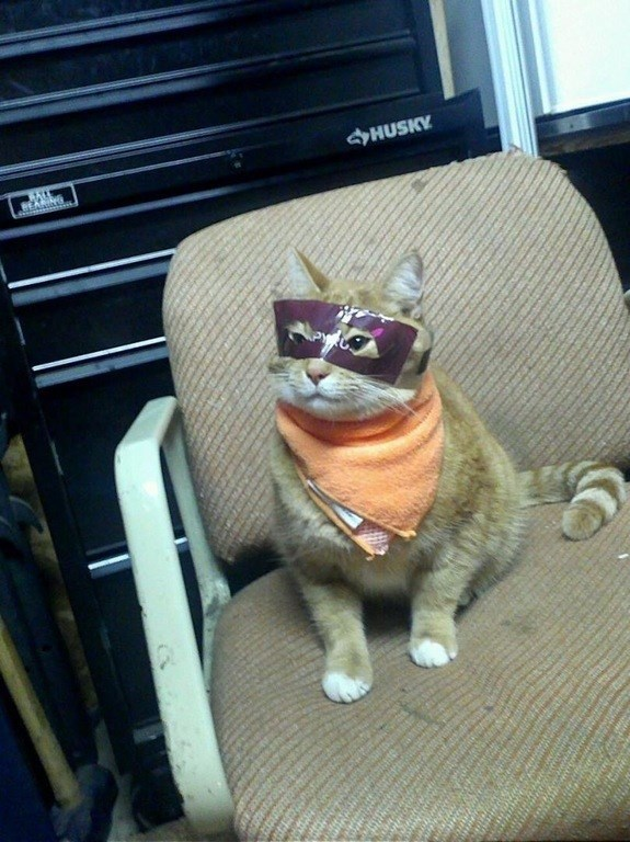 not the hero we need but the hero we deserve cat