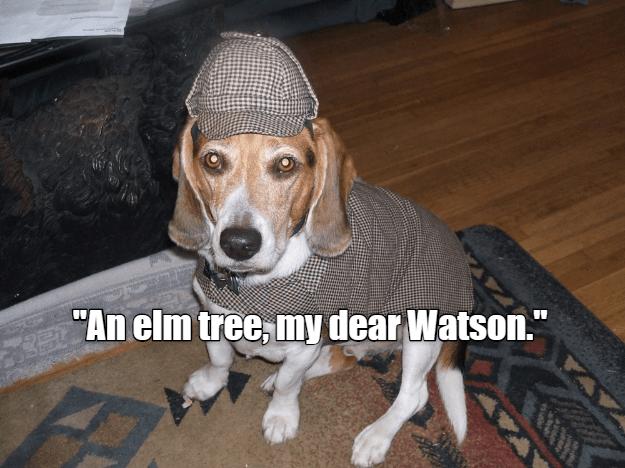 Sherlock Hound and the Burgeoning Bladder