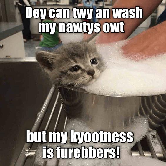 I has da kyoots!