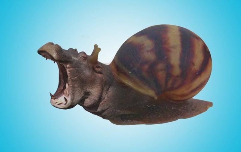 Lymnaeidae