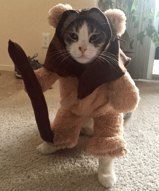 guys-girlfriend-makes-their-cat-an-ewok-costume