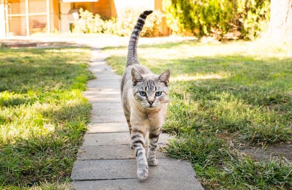 cat - Cat