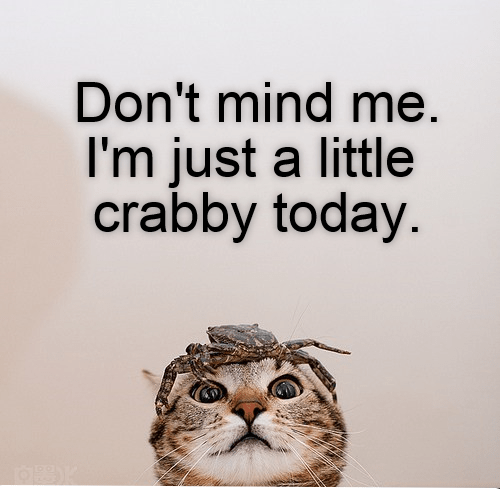 cat caption today crabby little - 8981152512