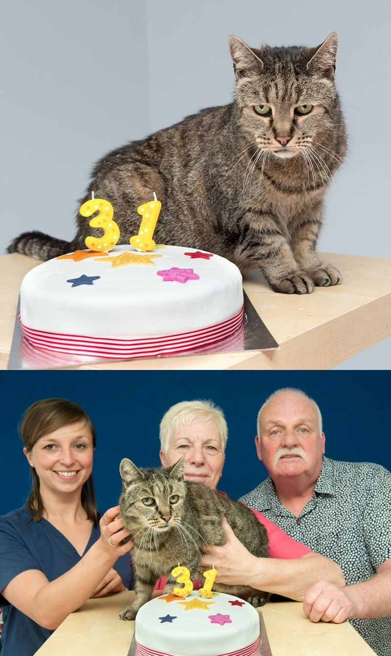old birthday Cats - 8981180416