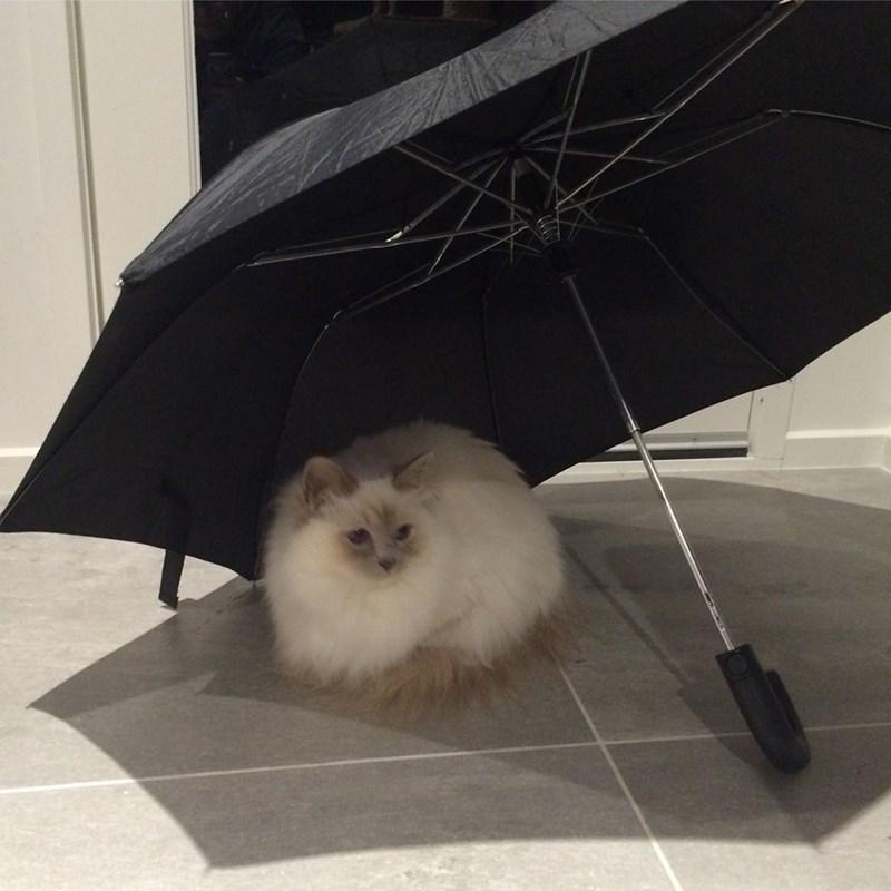 umbrella Cats - 8981228800