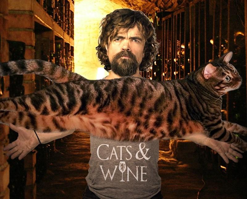 Cat - CATS& WYNE