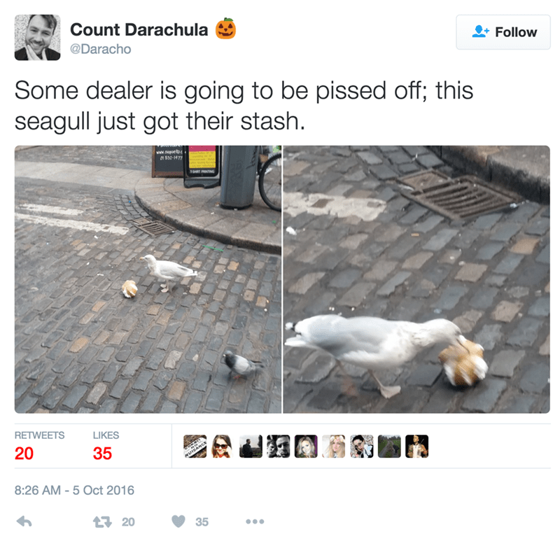 funny twitter image seagulls steals drug dealer's stash