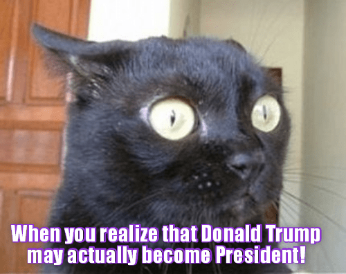 cat president trump become caption realize - 8981385216