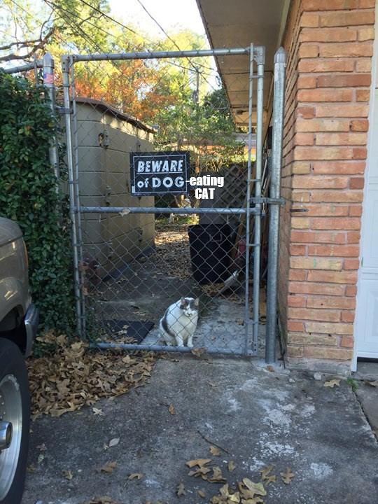 cat beware caption - 8981421824