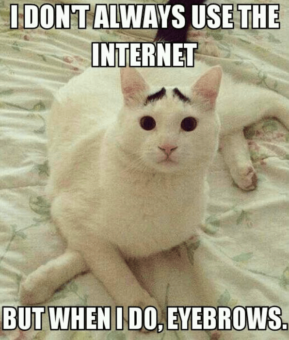 Cat - IDONTALWAYS USE THE INTERNET BUT WHEN IDO, EYEBROWS.