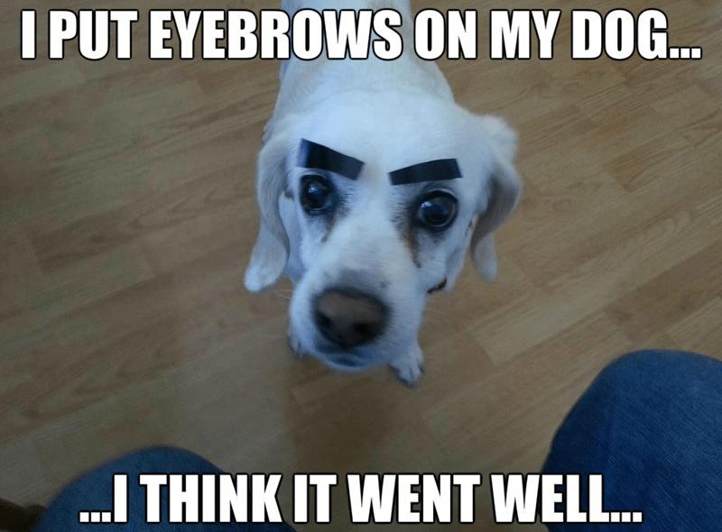 Dog - I PUT EYEBROWS ON MY DOG... I THINK IT WENT WELL...