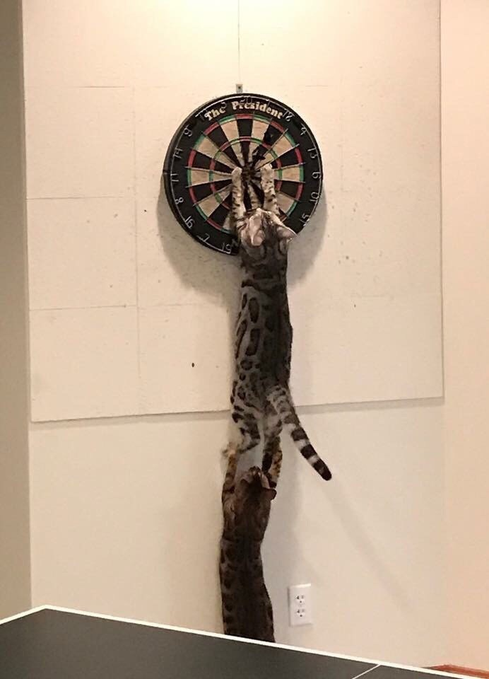 But Have You Ever Seen Cats Playing Darts?