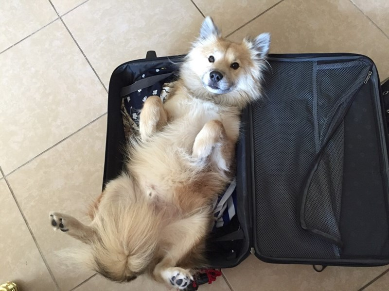 dogs packing luggage - 8981491968