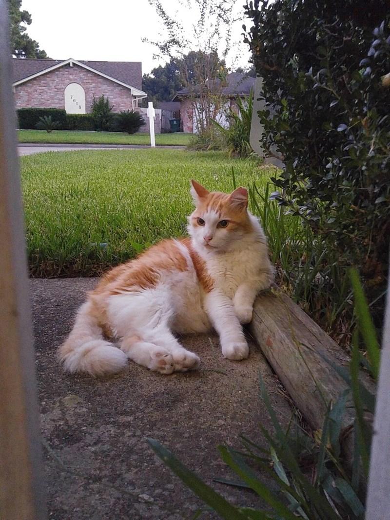 chillin Cats - 8981492224