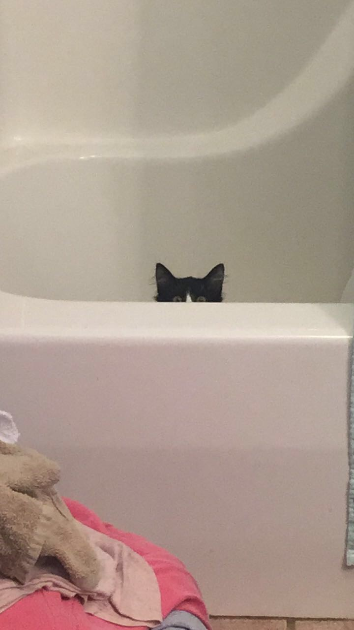 creepy Cats - 8981726976