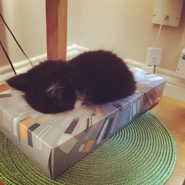 kitten Cats sleeping - 8981728000