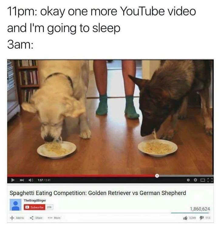 dogs,youtube,insomnia