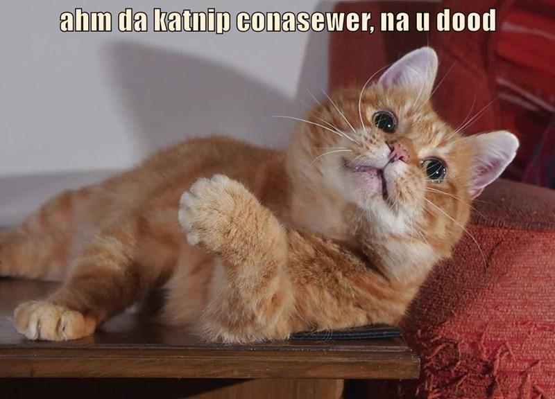 ahm da katnip conasewer, na u dood