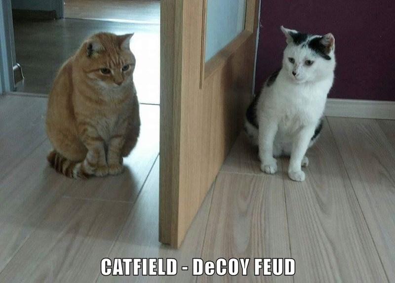 CATFIELD - DeCOY FEUD