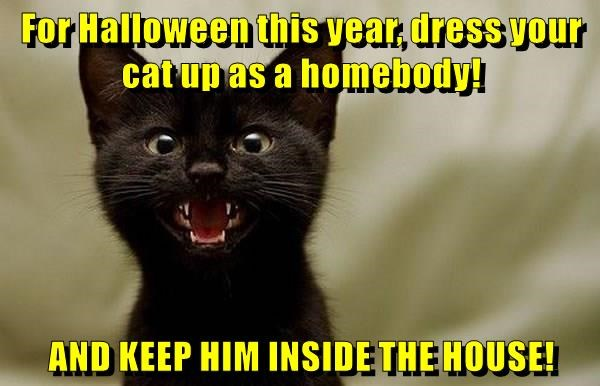 For Halloween this year, dress your cat up as a homebody! AND KEEP HIM INSIDE THE HOUSE!